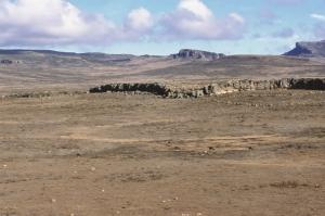 Ethiopian wolves. Bale mountains. Ethopia