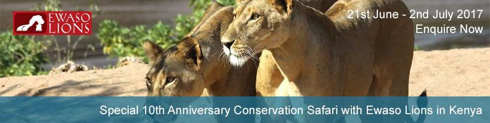 10th Anniversary Conservation Safari with Ewaso Lions in Kenya
