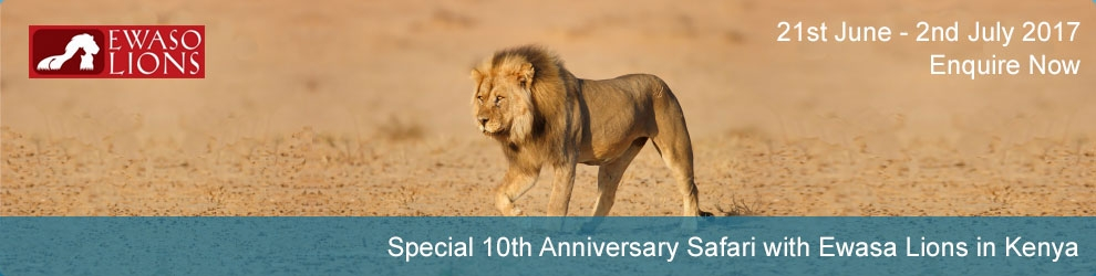 Special 10th Anniversary Safari with Ewasa Lions in Kenya