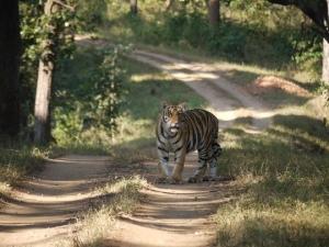 Tiger by Martin Beach