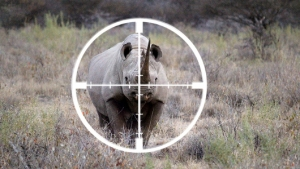 black rhino hunting