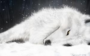 snow_wolf_on snow