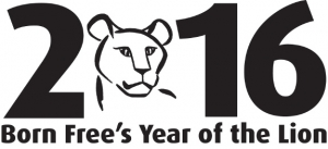 2016 is the Born Free Foundation's Year of the Lion