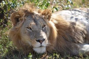 Lion J Dunn
