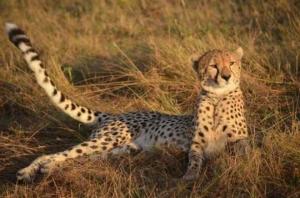 cheetah j dunn
