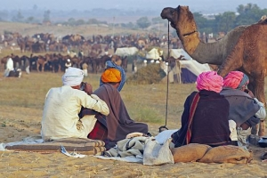 Colourful Turbans at the Pushkar Fair