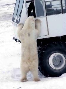 tundra_buggy_2004-11-131